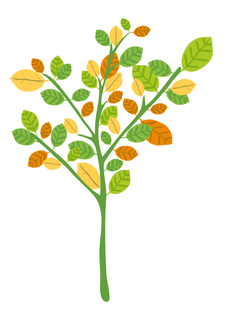 LEaF Translations tree